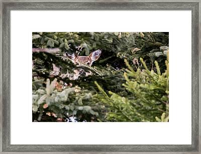 Enchantress Framed Print