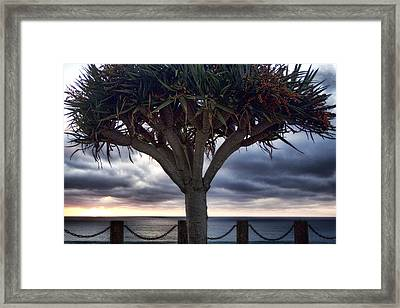 Encinitas Sunset Framed Print by Carol Leigh