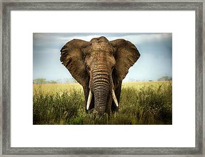 Encounters In Serengeti Framed Print