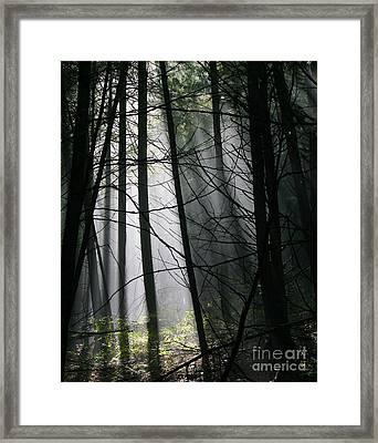 Encounters Of The Vermont Kind  Framed Print
