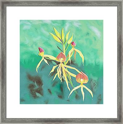 Encyclia Cochleata Orchid Framed Print by Joyce Small