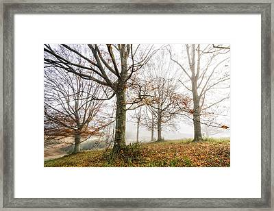 End Of Fall Framed Print