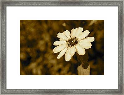 Framed Print featuring the photograph End Of Season by Photographic Arts And Design Studio