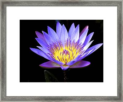 End Of Summer Bloom Framed Print