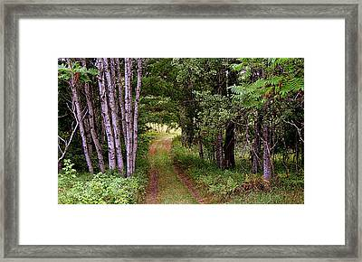 End Of The Road Framed Print by Tam Graff