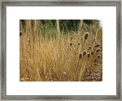 End Of The Spring Framed Print
