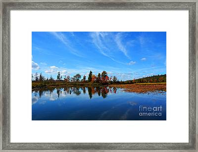 End Of The Tail Framed Print by Christine Dekkers