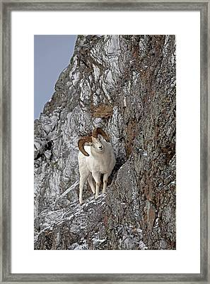 End Of The Trail Framed Print by Tim Grams