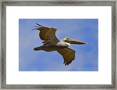 Framed Print featuring the photograph Endangered No More by Gary Holmes