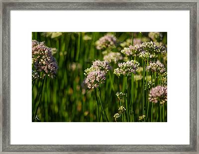 Endless Beauty Framed Print