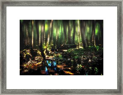 Endless Forest Framed Print