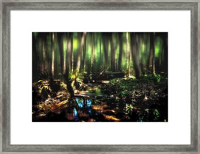Endless Forest Framed Print