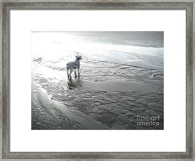 Endless Possibilities Framed Print by Stephanie Cheyenne Vize