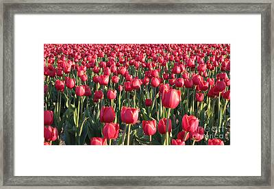 Endless Red Tulips Canvas Framed Print