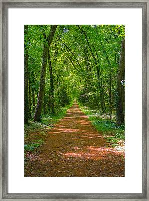 Endless Trail Into The Forest Framed Print