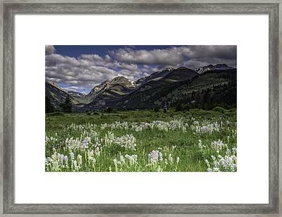 Endo-valley Meadow  Framed Print by Tom Wilbert