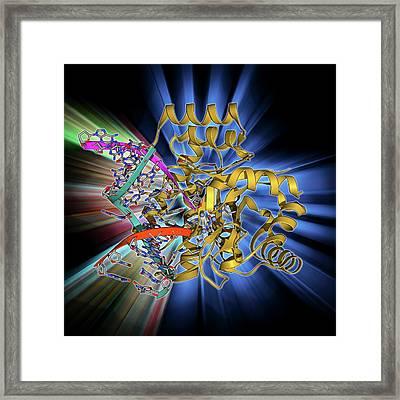 Endonuclease Iv Molecule Framed Print by Laguna Design