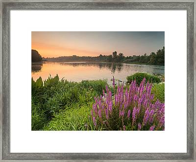 Energize Framed Print by Davorin Mance