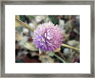 Energized Framed Print by Mike Podhorzer