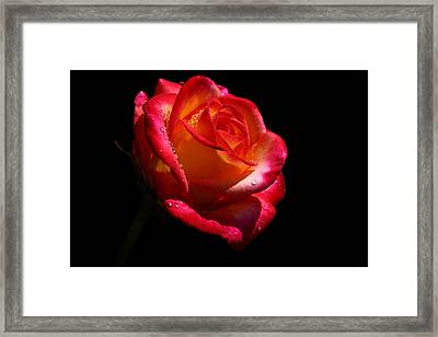 Framed Print featuring the photograph Enflamed by Doug Norkum
