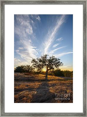 Engelmann Oak Sunset Framed Print