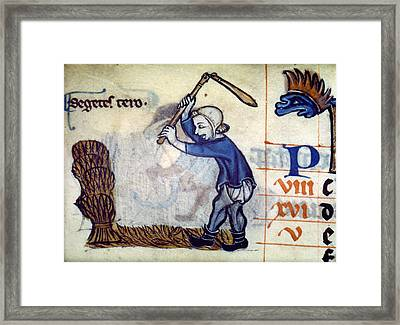 England Threshing Wheat Framed Print