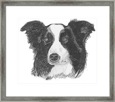 English Border Collie Framed Print by Catherine Roberts