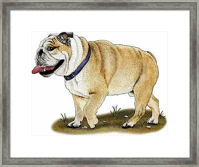 English Bulldog Framed Print by Roger Hall