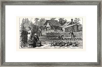 English Garden. Scenes Rugby, The English Colony Tennessee Framed Print