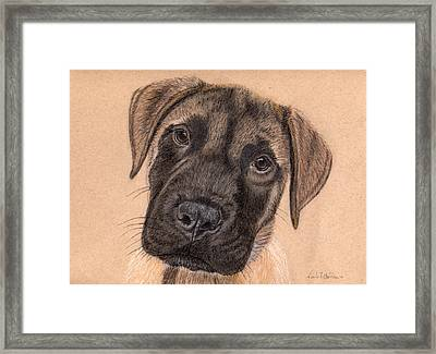 English Mastiff Puppy Framed Print by Nicole I Hamilton
