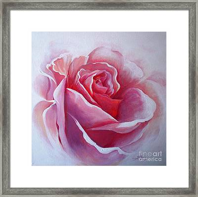 English Rose Framed Print