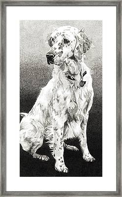 English Setter Framed Print by Rob Christensen
