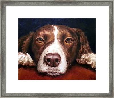 English Springer Spaniel Resting On Dark Red Framed Print by Dottie Dracos