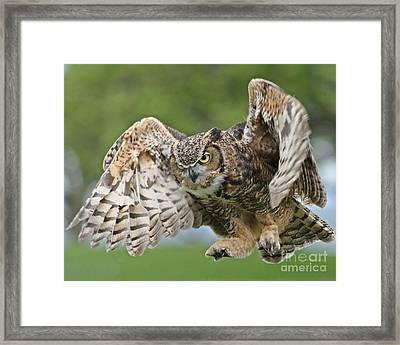Framed Print featuring the photograph Engulf by Heather King