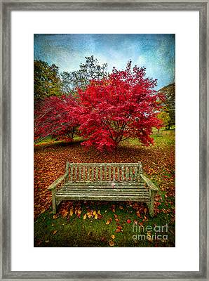 Enjoy The View Framed Print by Adrian Evans
