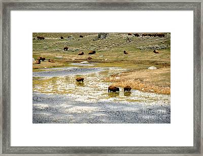 Enjoying A Morning's Dip Framed Print by Birches Photography