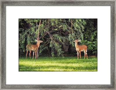 Enjoying A Weeping Willow Salad Framed Print by Linda Tiepelman