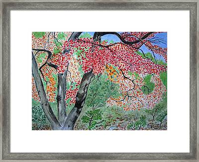 Enjoying Lost Maples Framed Print