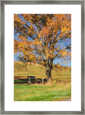 Enjoying The Autumn Shade Framed Print by Lois Bryan
