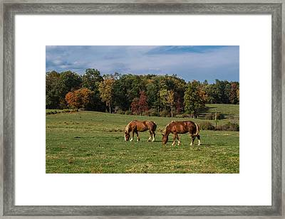 Enjoying The Colors Framed Print by Anthony Thomas