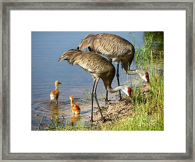 Enjoying The Water Framed Print by Zina Stromberg