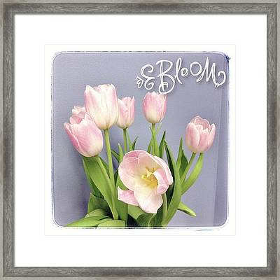 Enjoying #tulips In My Office This Framed Print