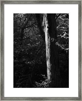 Enlightened Bw Framed Print by Elizabeth Sullivan