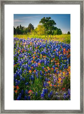 Ennis Bluebonnets Framed Print by Inge Johnsson