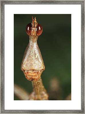 Ent Head Framed Print by JP Lawrence