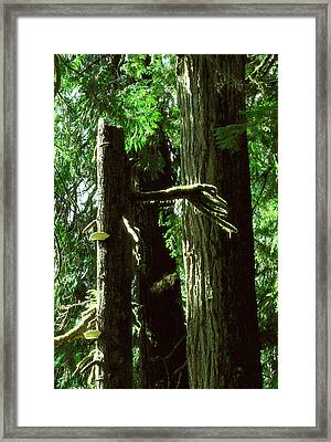 Mystery Ent Showing The Way Framed Print by Kim Lessel
