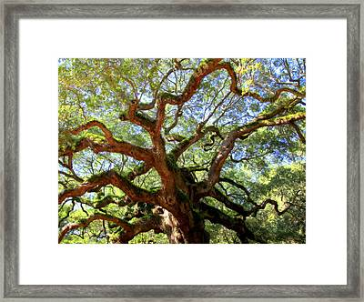 Entangled Beauty Framed Print by Karen Wiles