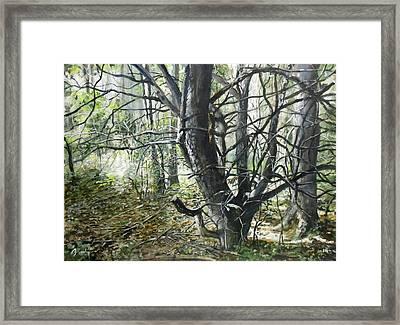 Entangled Framed Print