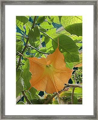 Enter The Sun Framed Print