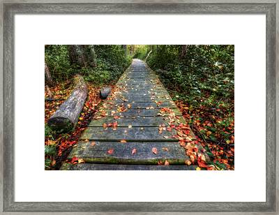 Enter The Woods - Retzer Nature Center - Waukesha Framed Print